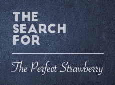 The Search Begins - Strawberry